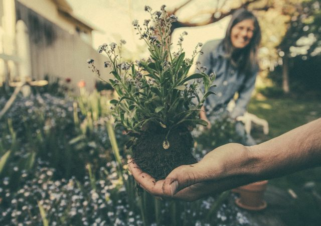 Trädgårdsskötsel för  privatpersoner / företag